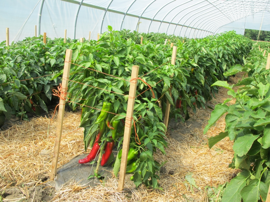 Fundamentals of resilient design 10 local and regional - Increase greenhouse production cost free trick ...