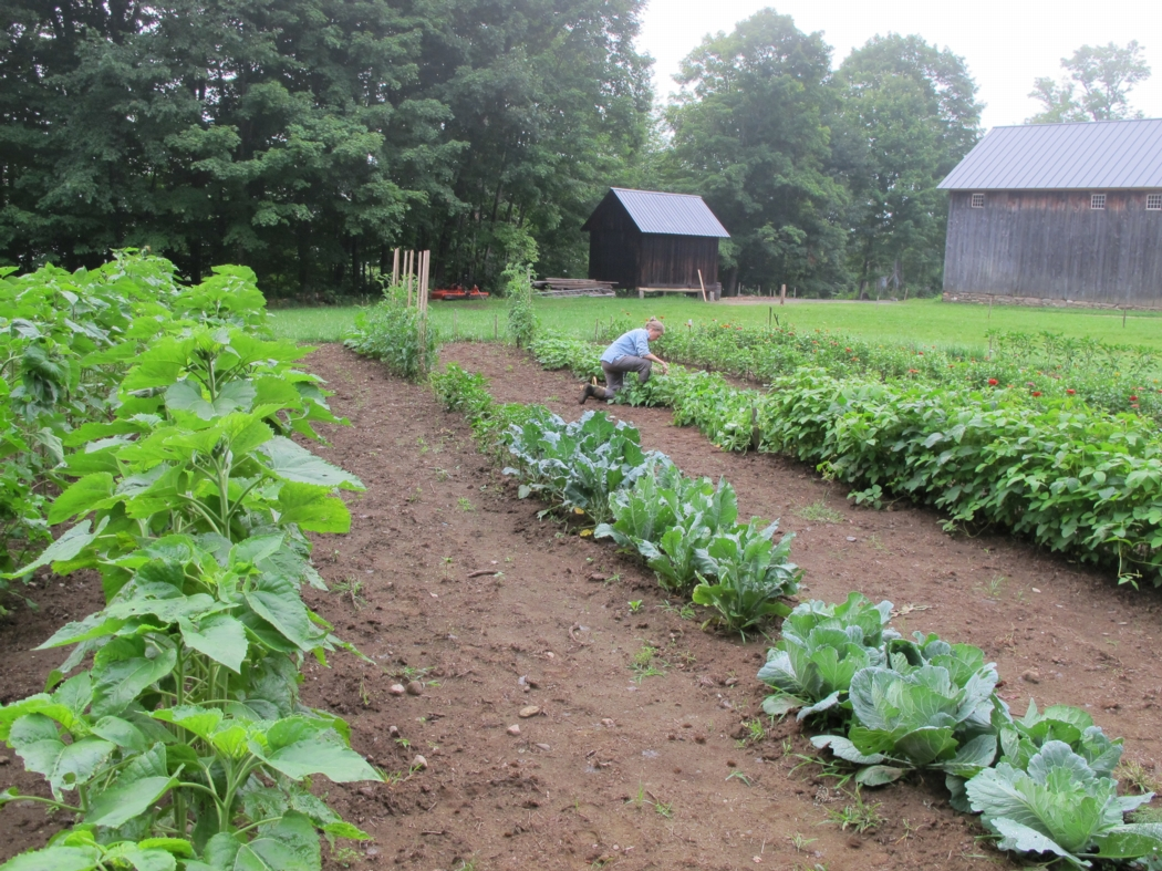 Picking green beans last week in our nearly-half-acre garden