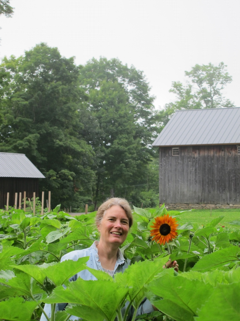 Our first sunflowers are blooming.