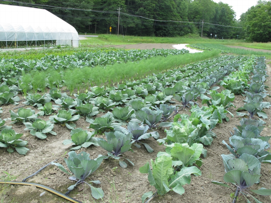 The six-acre Kingsbury Farm in Warren, Vermont, which produces over 100,000 pounds of food for the Vermont Food Bank, local restaurants, and sale at a farmstand. Photo: Alex Wilson