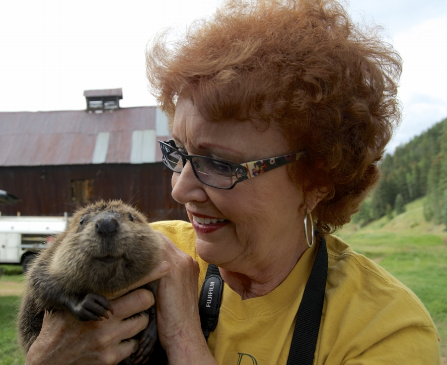 Sherri Tippie, an expert in beaver rescue reintroducing a beaver at Elk Ranch on East Beaver Creek in Colorado--where beaavers had long been absent. Photo: Ford McClave, PBS Nature
