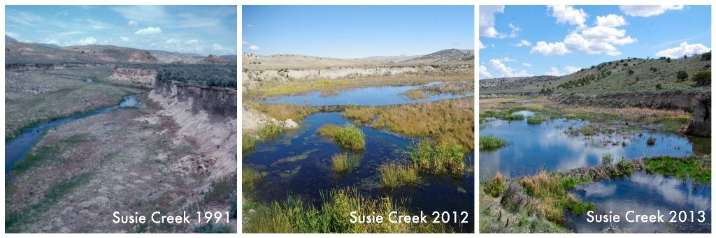 How beavers have enhanced the Susie Creek Watershed in north-central Nevada since 1991. Photo: Bureau of Land Management