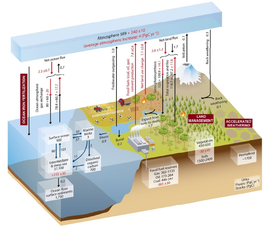 The carbon cycle sequesters huge amounts of carbon dioxide; some of those natural processes can be enhanced by human actions. Source: National Academy of Sciences